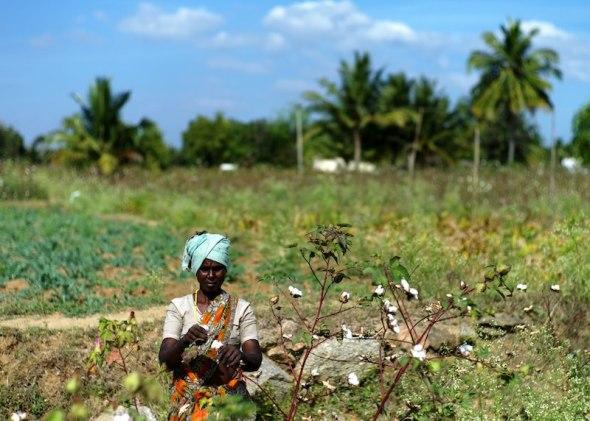 Fairtrade-Baumwollpflueckerin bei Yelagiri, Indien
